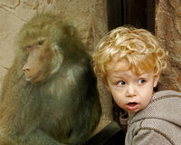 Portrait of boy and baboon. Baboon in captivity behind glass looking in same direction as young boy at zoo Royalty Free Stock Image