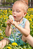 Portrait of a boy with dandelions. Stock Photo