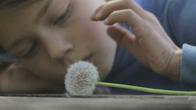 Portrait of a boy with a flower dandelion. The face close-up child with dandelion. Emotional portrait of a European teenager with a flower dandelion stock video