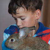 Portrait of a boy, he is holding rabbit Stock Image