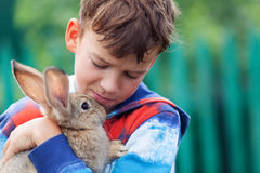 Portrait of boy, he is holding rabbit Royalty Free Stock Photo