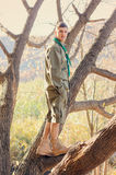 Portrait of Boy Scout Standing in Tree Stock Image
