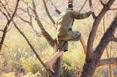 Portrait of Boy Scout Standing in Tree Royalty Free Stock Images