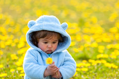 Portrait of a boy in spring flowers field Stock Photos