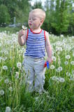 Portrait of a boy in a striped. Vest blowing on a dandelion Stock Image