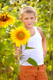 Portrait of a boy with sunflower Royalty Free Stock Photos
