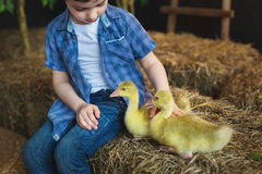 Portrait of a boy who stroking of geese on farm Royalty Free Stock Photos