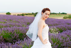 Portrait of a bride in a lavender field Stock Images