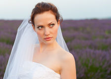 Portrait of a bride in a lavender field Royalty Free Stock Photos