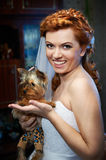 Portrait of a bride with a small dog Royalty Free Stock Photos