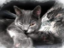 Portrait of a British blue kitten. Stock Photo