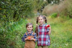 Portrait of a brother and sister in the garden with red apples in their hands. royalty free stock photography