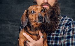Portrait of brown badger dog and his bearded man friend. Close up studio portrait of cute brown badger dog and his bearded man friend Royalty Free Stock Photography