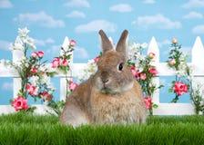 Portrait brown dwarf bunny in flower garden Stock Photos