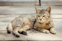 Portrait of brown eyed cat on old wooden Stock Images