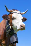 Portrait of Brown milk cow with bell Royalty Free Stock Images