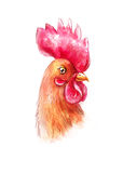 Portrait of a brown rooster in watercolor and colored pencil Stock Images