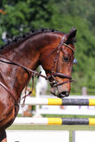 Portrait of brown sport horse during jumping show Royalty Free Stock Image