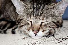 Portrait of brown striped cat sleeping on the white cracked surf Stock Photo