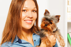 Portrait of brown Yorkshire Terrier and woman Stock Photography
