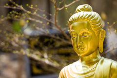 Portrait of Buddha statue Royalty Free Stock Images