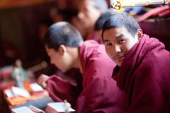 Portrait of buddhist monk at puja Royalty Free Stock Photography