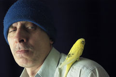 Portrait with a budgie Royalty Free Stock Image