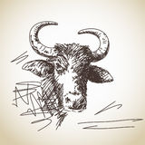 Portrait of buffalo Stock Images