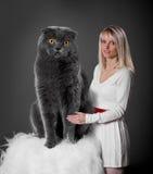 Portrait of a cat Stock Images
