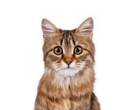 Portrait of cat. Portrait of pretty young cat over white background stock photography