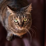Portrait of a cat. With green eyes Stock Photos