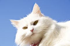 Portrait of cat against blue sky Royalty Free Stock Photography