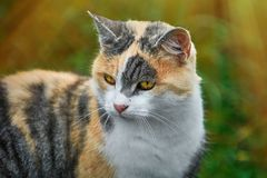 Portrait of Cat Royalty Free Stock Images