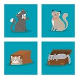 Portrait cat animal pet cute kitten purebred feline kitty domestic   Royalty Free Stock Image