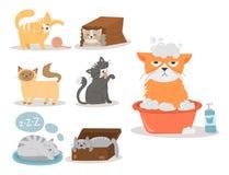 Portrait cat animal pet cute kitten purebred feline kitty  Stock Images