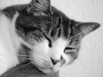 Portrait of a cat asleep Stock Photo