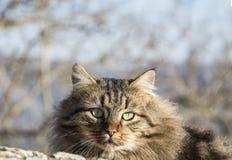 Portrait of cat Stock Photo