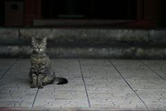 Portrait of a cat. Beijing, July 2007 Stock Photography