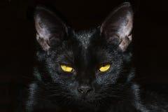 Portrait of cat Royalty Free Stock Photos