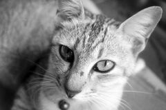 Portrait of cat in black and white