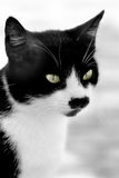 Portrait of a cat. Portrait of a black and white cat with a distinctive look Royalty Free Stock Images