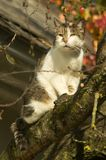 Portrait of cat on branch stock photos