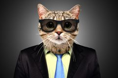 Portrait of a cat in a business suit. And glasses on black background stock photography