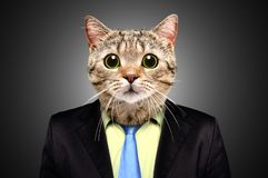 Portrait of a cat in a business suit. On black background royalty free stock images