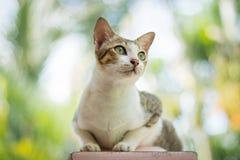 Portrait of cat. Portrait of Calico cat on the floor Stock Images