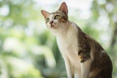 Portrait of cat. Portrait of Calico cat on the floor Stock Image