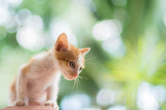Portrait of cat Stock Images