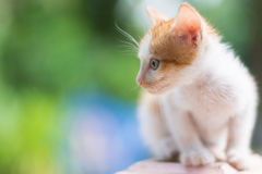 Portrait of cat. Portrait of Calico cat on the floor Stock Images