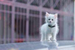 Portrait of cat Stock Image