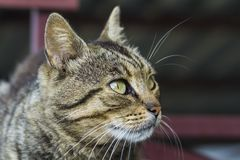 Portrait of a cat close-up. Pet animal. Stock Photo